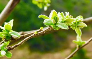 Primavera Humana